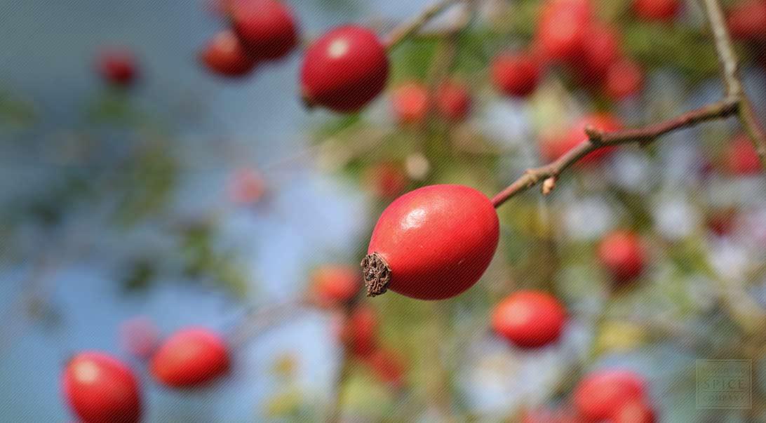 BULK POWDERS  Compléments Alimentaires amp Nutrition