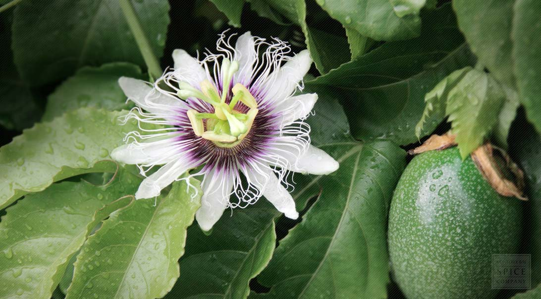 Bulk Passion Flower Passionflower Brings Peace