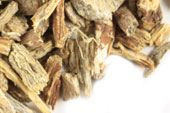 Echinacea ang. root, c/s, wild crafted
