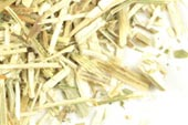 Wild carrot herb, c/s, wild crafted