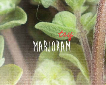 [ marjoram ] ~ from Monterey Bay Spice Co