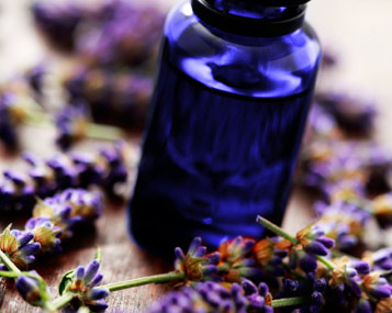 [ lavender essential oil ] ~ from Monterey Bay Spice Co