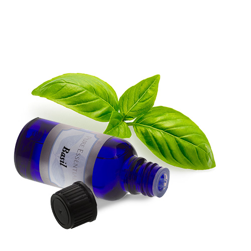 bulk basil essential oil