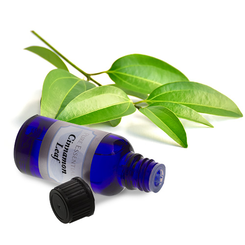 bulk cinnamon leaf essential oil