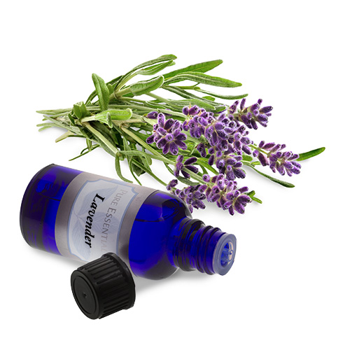 bulk lavender essential oil
