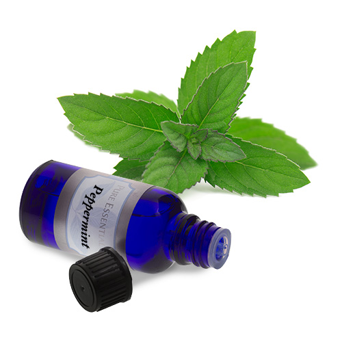 bulk peppermint essential oil