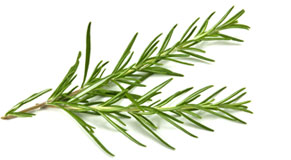 [ rosemary essential oil ] ~ from Monterey Bay Spice Company