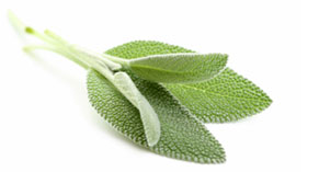 [ sage essential oil ] ~ from Monterey Bay Spice Company