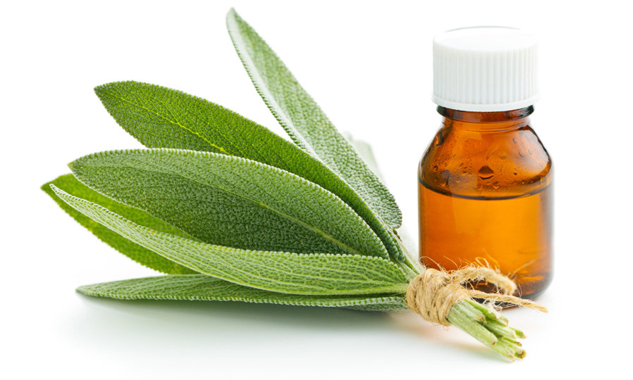 Sage and Sage Essential Oil