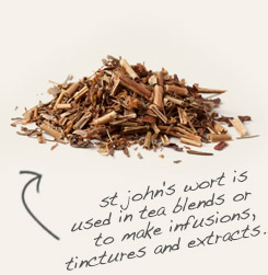 [ tip: Partner cramp bark with St. John's wort in topical formulations for sore muscles.  ~ from Monterey Bay Spice Company ]