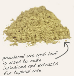 [ tip: Blend cut & sifted couchgrass root with Uva ursi powder on topical formulations. ~ from Monterey Bay Spice Company ]
