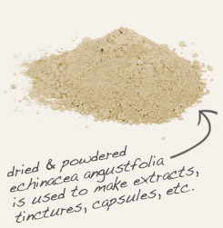 [ tip: Encapsulate or tincture echinacea and goldenseal together.  ~ from Monterey Bay Spice Company ]