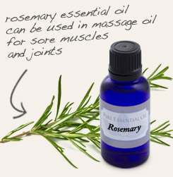 [ tip: Add a few drops of rosemary essential oil to a handful of safflower oil and massage onto the scalp before shampooing.  ~ from Monterey Bay Spice Company ]