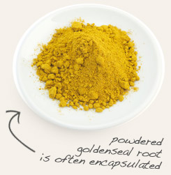 [ tip: Combine eyebright with goldenseal when making topical formulations. ~ from Monterey Bay Spice Company ]