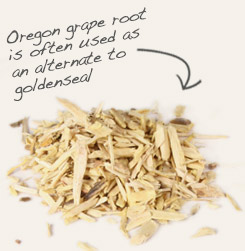 [ tip: Combine coptis rhizome root with Oregon grape root bark in topical formulations, which also contains berberine. ~ from Monterey Bay Spice Company ]