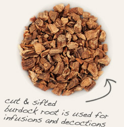 [ tip: Pair kudzu root with burdock root to flavor traditional Japanese soups. ~ from Monterey Bay Spice Company ]