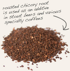 [ chicory root tip: Combine roasted dandelion root with roasted chicory root to make a bold hot beverage. ~ from Monterey Bay Spice Company ]