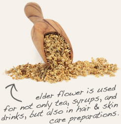 [ tip: Elder flower and lemon balm pair well together in soaps, lotions and other cosmetic formulations.   ~ from Monterey Bay Spice Company ]