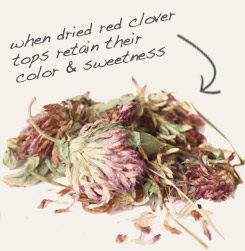 [ tip: Combine heal-all herb with red clover flowers when making topical preparations.  ~ from Monterey Bay Spice Company ]