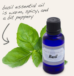 [ tip: The peppery scent of basil essential oil blends nicely with lemongrass in perfumes, colognes and aroma sprays. ~ from Monterey Bay Spice Company ]