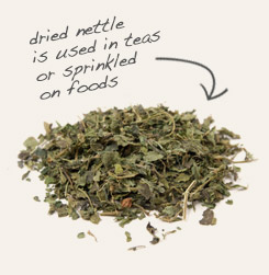 [ tip: Mix goldenseal leaf with dried nettle leaf in tea blends.  ~ from Monterey Bay Spice Company ]