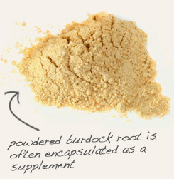 [ tip: Encapsulate powdered milk thistle seed with powdered burdock root as a dietary supplement.  ~ from Monterey Bay Spice Company ]