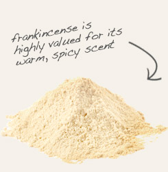 [ frankincense powder tip: Mix organic cinnamon powder with powdered frankincense to make fragrant incense.  ~ from Monterey Bay Spice Company ]