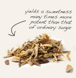 [ tip: Pair codonopsis root with licorice root in sweet tea blends. ~ from Monterey Bay Spice Company ]