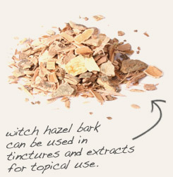 [ tip: Infuse goldenrod and witch hazel bark in alcohol to produce topical sprays and liniments.   ~ from Monterey Bay Spice Company ]
