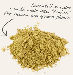 "[ tip: Combine nettle leaf powder with horsetail powder to make an ""herbal tea"" for house and garden plants ~ from Monterey Bay Spice Company ]"