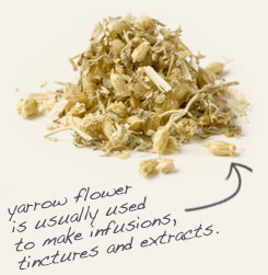 [ tip: Combine linden with yarrow in topical formulations.   ~ from Monterey Bay Spice Company ]