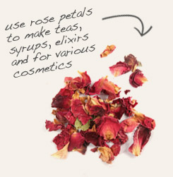 [ tip: Combine marshmallow root with rose petals in tea blends.  ~ from Monterey Bay Spice Company ]