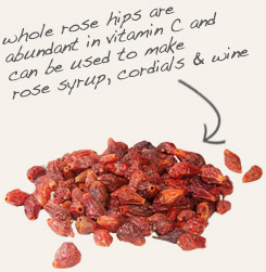 [ tip: Tincture grape seeds and rose hips together for greater antioxidant value.  ~ from Monterey Bay Spice Company ]