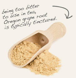 [ tip: Blend oregon grape root powder with powdered Oregon grape root in wound powders.  ~ from Monterey Bay Spice Company ]