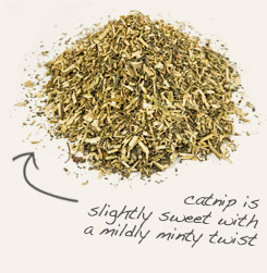 [ tip: Combine powdered echinacea angustifolia root with catnip in winter tea blends.  ~ from Monterey Bay Spice Company ]