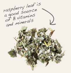 [ raspberry leaf tip: Raspberry and chamomile are often combined in tea blends formulated to promote relaxation. ~ from Monterey Bay Spice Company ]
