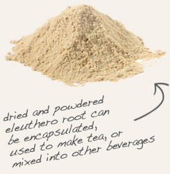 [ tip: Encapsulate powdered American ginseng root with powdered eleuthero root, formerly known as Siberian ginseng.  ~ from Monterey Bay Spice Company ]