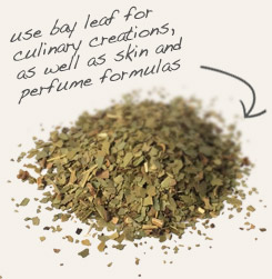 [ tip: Partner mistletoe leaf with coconut oil when making homemade lotions, creams and balms.  ~ from Monterey Bay Spice Company ]