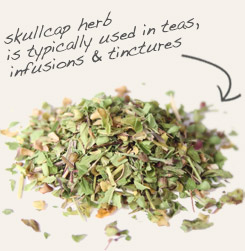 [ skullcap tip: Partner dandelion leaf with skullcap to make a tasty, relaxing tea.   ~ from Monterey Bay Spice Company ]