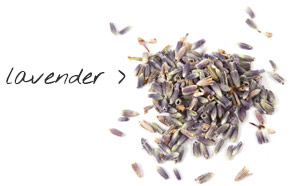 [ lavender ] ~ from Monterey Bay Spice Company