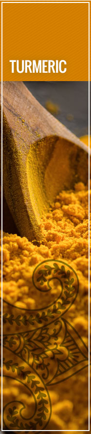 [ Select Spices of India: Turmeric ] ~ from Monterey Bay Spice