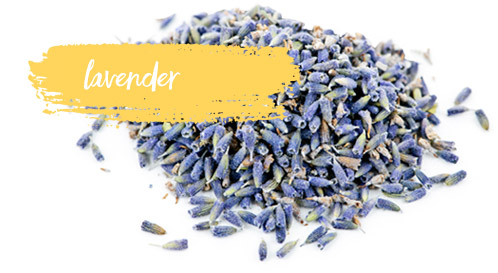 [ Late-Summer Herbal Skin Care Formulas: Lavender ] ~ from Monterey Bay Spice Company