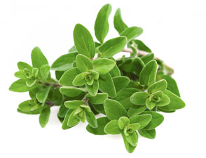 [ marjoram ] ~ from Monterey Bay Spice Company