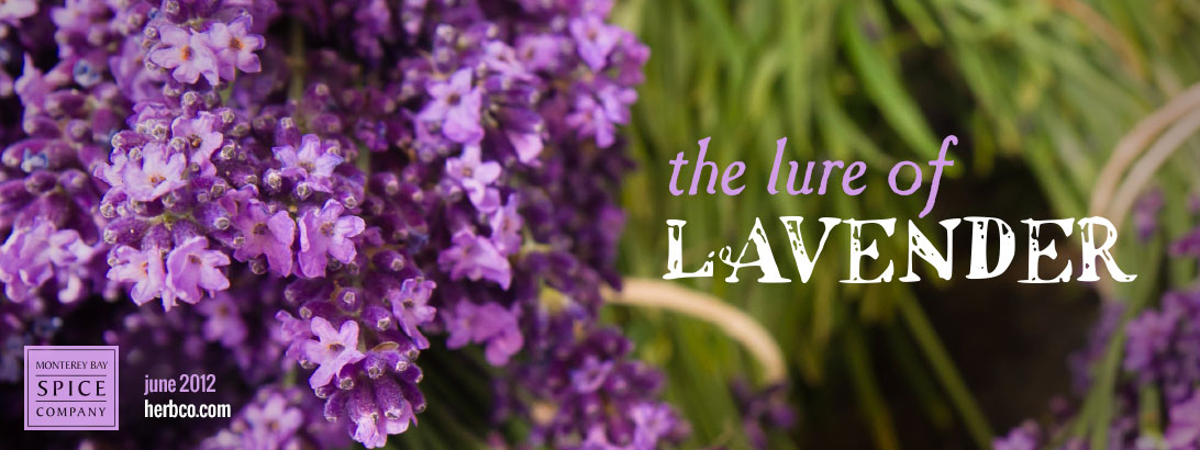 [ The Lure of Lavender: Intro ] ~ from Monterey Bay Spice Company