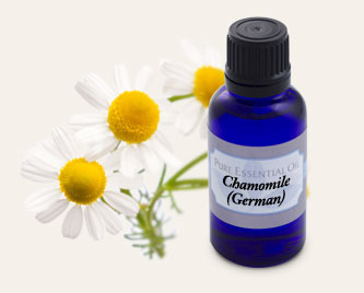 Bulk Chamomile (German) Essential Oil ~ Monterey Bay Spice Co