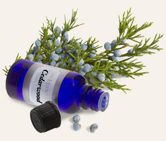 Bulk Cedarwood Essential Oil ~ Monterey Bay Spice Co