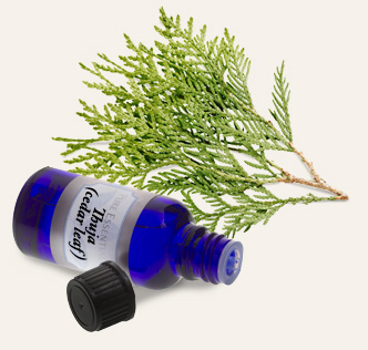 Bulk Thuja (Cedar Leaf) Essential Oil ~ Monterey Bay Spice Co