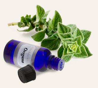 Bulk Oregano Essential Oil ~ Monterey Bay Spice Co