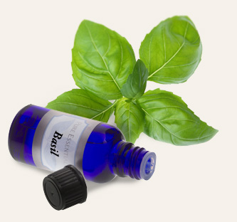 Bulk Basil Essential Oil ~ Monterey Bay Spice Co