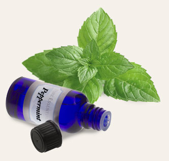 Bulk Peppermint Essential Oil ~ Monterey Bay Spice Co